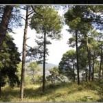 dlf-samavana-onsite-vegetation-samavana-kasauli