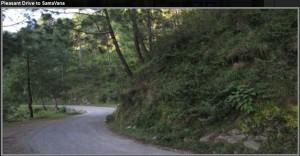 dlf-samavana-pleasant drive to samavana kasauli