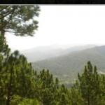 dlf-samavana-view-from-site-samavana-kasauli