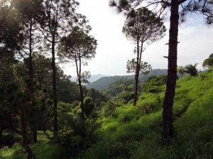 sandwod-kasauli forest-view